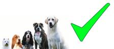 ok chiens